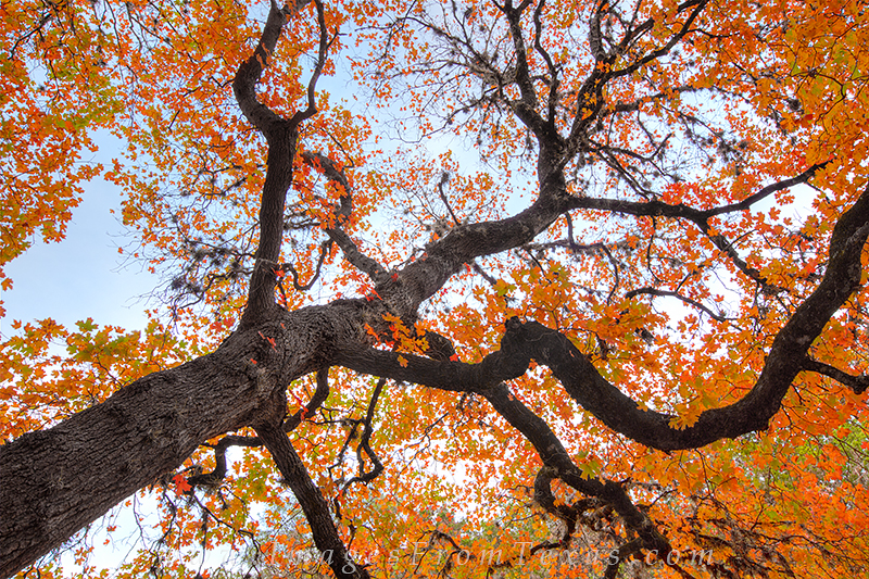 lost maples state park,red maples,autumn in the hill country,autumn colors in texas,texas hill country,autumn,fall colors, photo