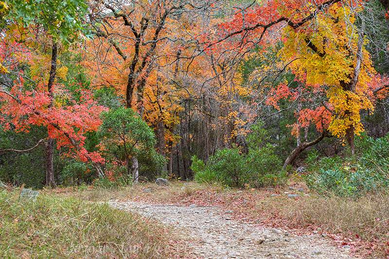 autumn in the hill country,fall colors in texas,texas hill country images,lost maples state park, photo