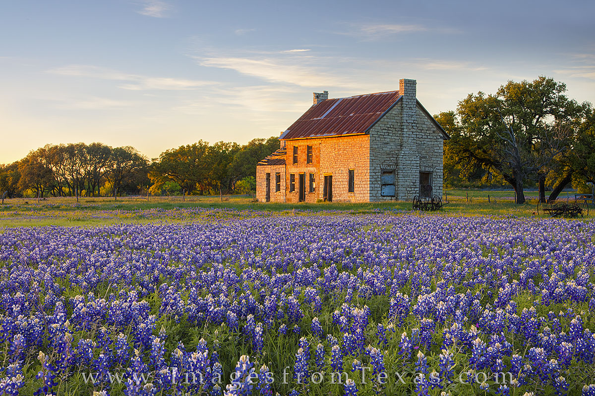 bluebonnets,texas hill country,marble falls,texas wildflower images,bluebonnet prints, photo