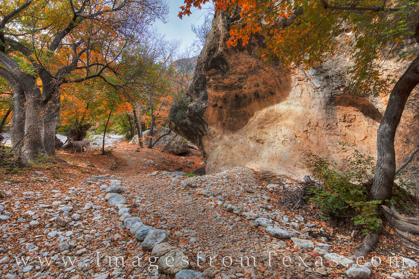 mckittrick canyon, grotto, guadalupe mountains, guadalupe mountains national park, texas national park, west texas, fall colors, texas fall colors, photo