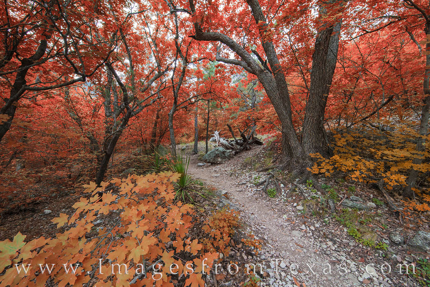 McKittrick Canyon, Guadalupe Mountains, Guadalupe Mountains National Park, Texas fall colors, Texas national parks, autumn colors, west texas, texas hiking, texas hikes, photo