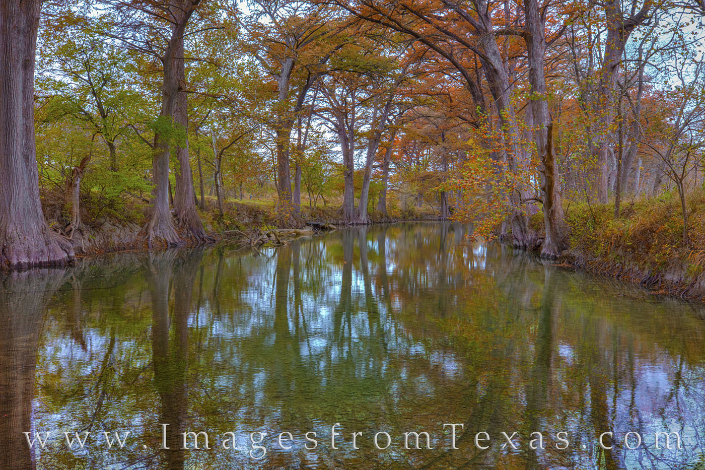 fall colors, autumn, cypress, medina river, photo