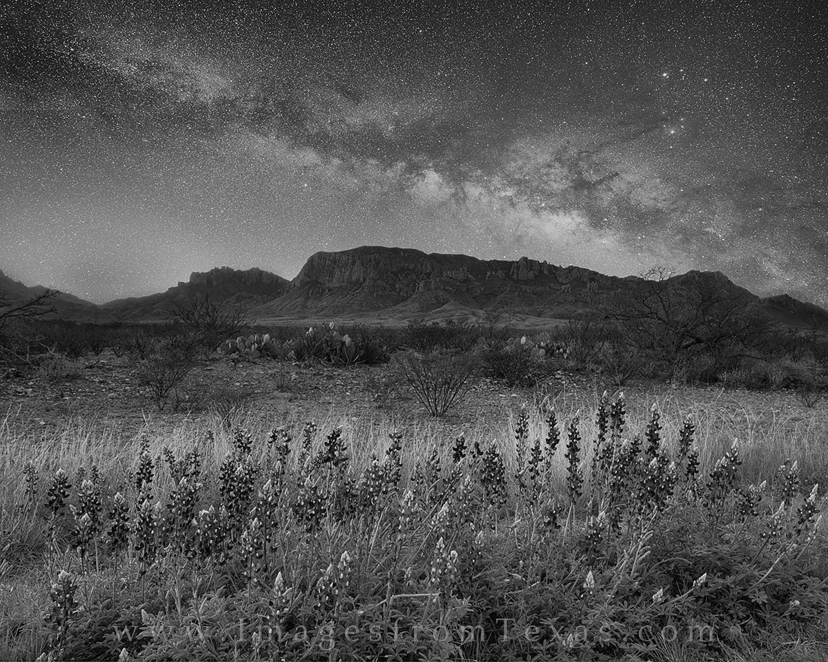This black and white bluebonnet image shows the cotnrast of the Milky Way overhead and the Chisos Mountains, desert, and wildflowers...