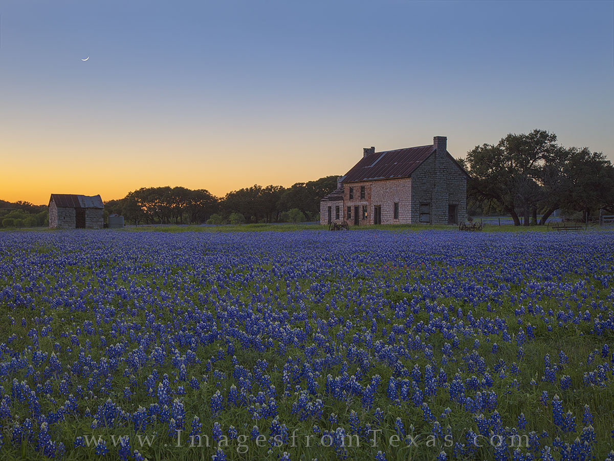 bluebonnets, marble falls, texas hill country, moon, texas wildflowers, bluebonnet photos, sunset, photo