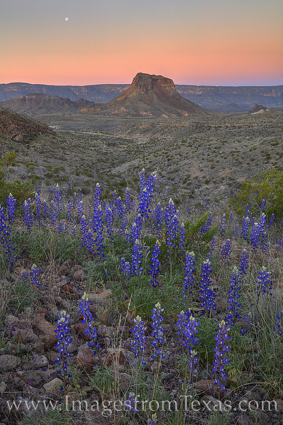 cerro castellan, big bend, big bend national park, moon, chihuahuan desert, sunrise, moonset, bluebonnets, wildflowers, texas bluebonnets, texas wildflowers, february, spring, bloom, photo
