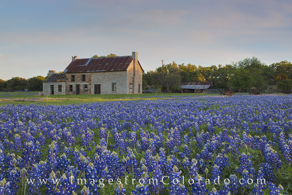 bluebonnets, bluebonnet photos, marble falls, stone building, texas hill country, texas wildflowers, photo