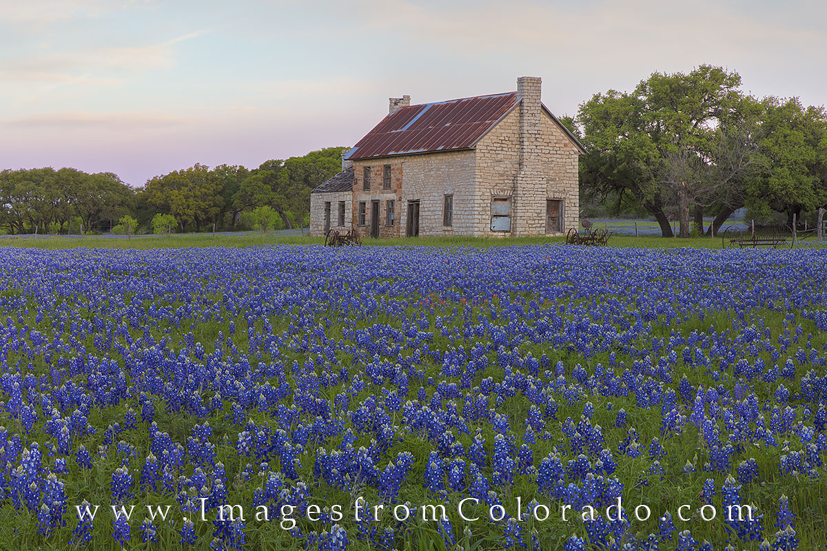 bluebonnets, texas bluebonnets, texas wildflowers, bluebonnet photos, bluebonnet, stone building, marble falls, marble falls, texas, texas landscapes, texas hill country, photo