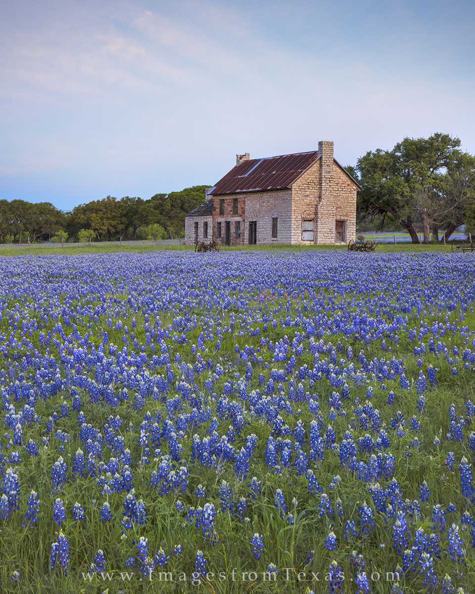bluebonnet prints, bluebonnet photos, texas wildflower prints, texas wildflower photos, bluebonnet house, blue, texas hill country, hill country photos, texas icons, texas landmarks, marble falls, photo