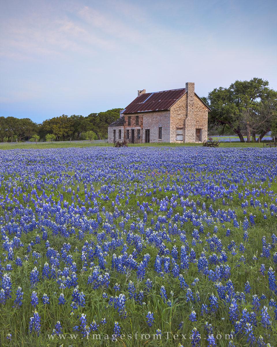 bluebonnet prints, bluebonnet photos, texas wildflower prints, texas wildflower photos, bluebonnet house, blue, texas hill country, hill country photos, texas icons, texas landmarks, marble falls, photo