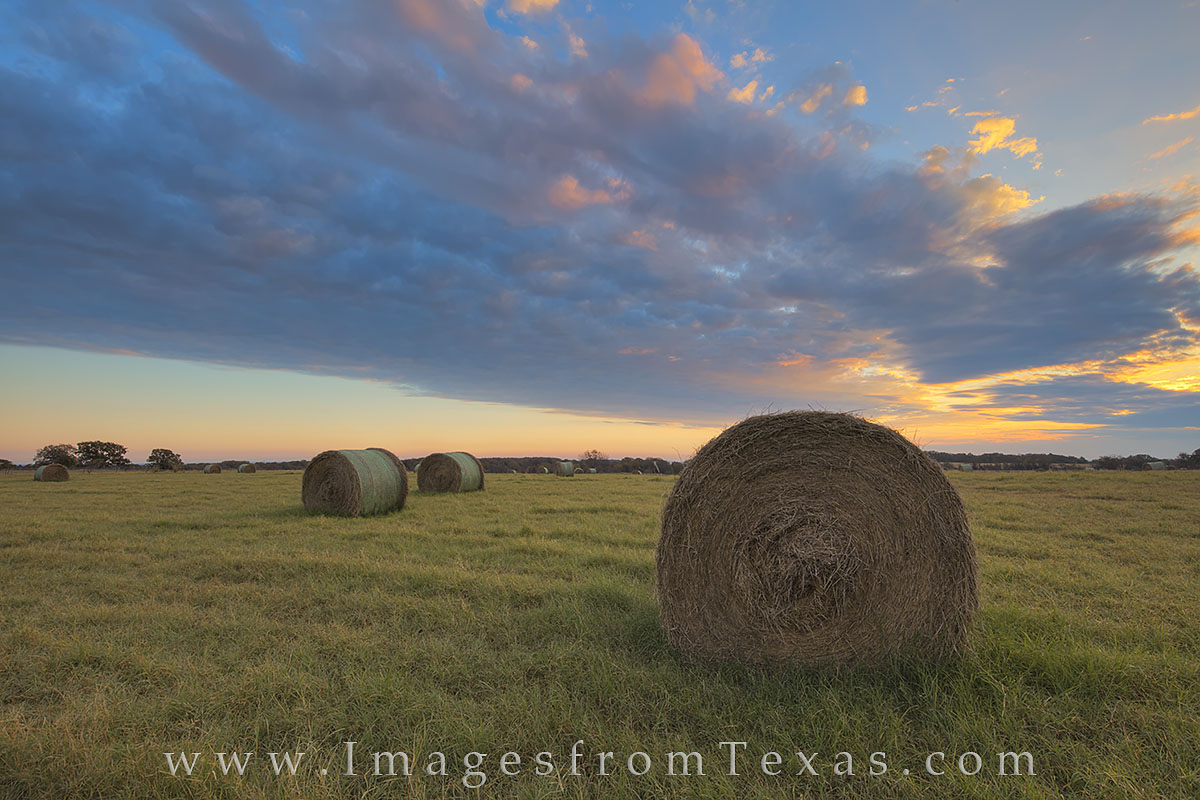 texas hay, hay field, texas hay field, texas landscape, texas farm, texas ranch, texas sunrise, texas harvest, texas, hay, photo