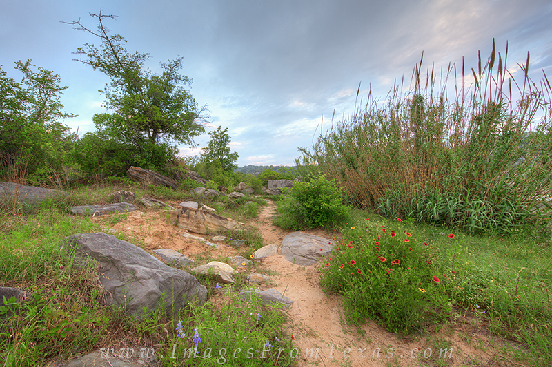 A path I often walk at Pedernales Falls State Park was showing April wildflowers, so I was obliged to stop and photograph these...