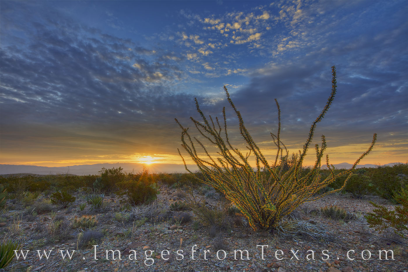 big bend national park, sunset, texas sunset, ocotillo, texas landscapes, chihuahuan desert, chisos mountains, photo