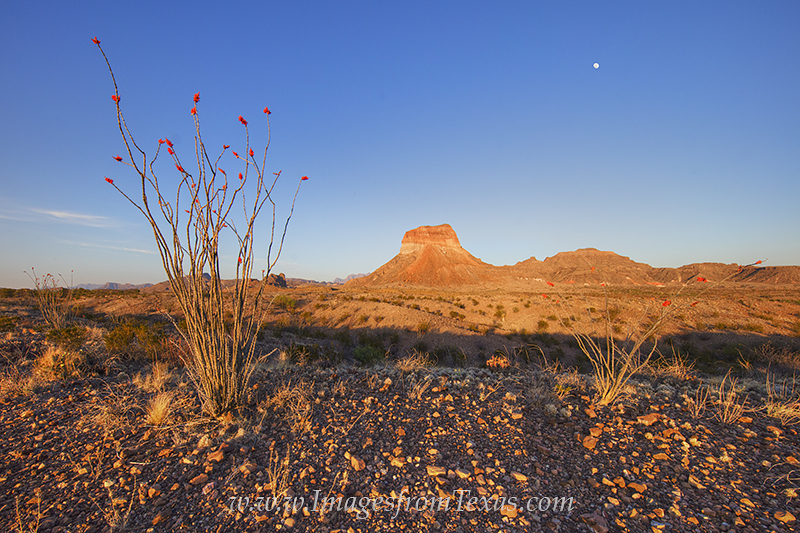 big bend national park,big bend images,chisos mountains,chihuahuan desert,ocotillo,big bend prints, photo