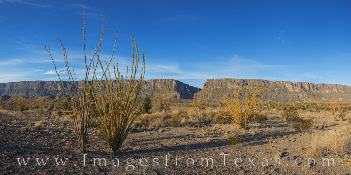big bend national park, big bend, santa elena canyon, ocotillo, panorama, texas national parks, texas parks, texas canyons, photo