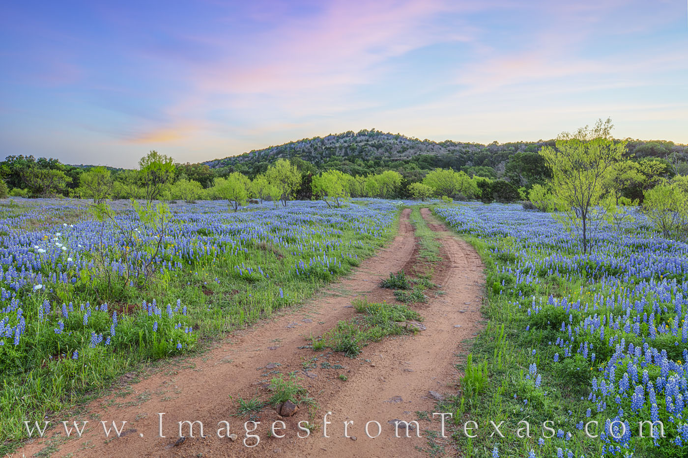 bluebonnets, spring, dirt road, evening, hill country, remote, photo