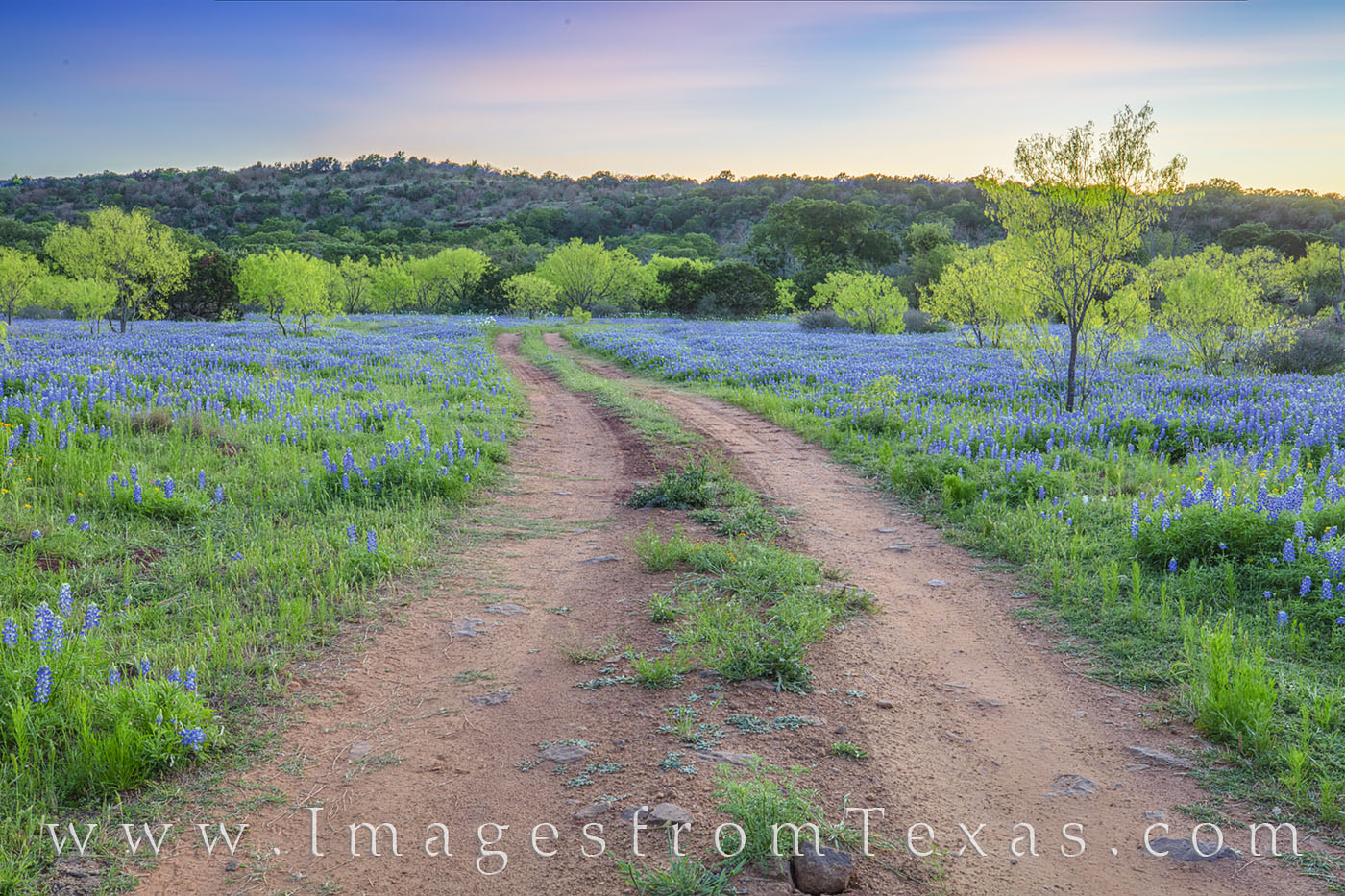 bluebonnets, wildflowers, sunset, hill country, evening, dirt road, peace, photo