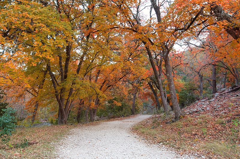 texas autumn colors,lost maples state park,texas hill country,texas landscapes, photo