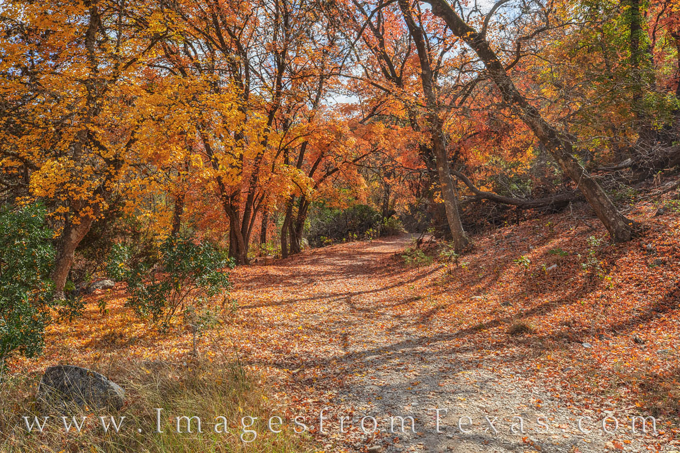 bigtooth maple, lost maples, fall, autumn, lost maples prints, hill country, hiking, walking, exploring, leaves, photo