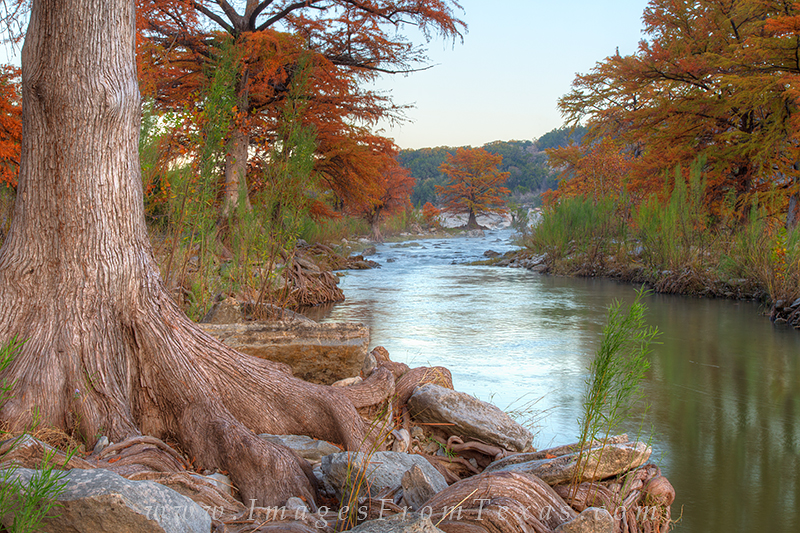 texas hill country images,pedernales falls state park pedernales river,cypress trees,cypress roots,texas hill country, photo