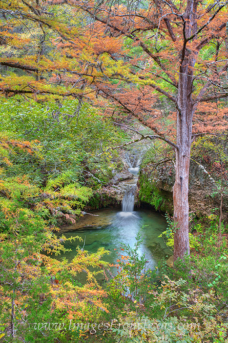 From a lookout over the small but beautiful falls, the cypress really show their colors in the fall. This Texas Fall Colors image...