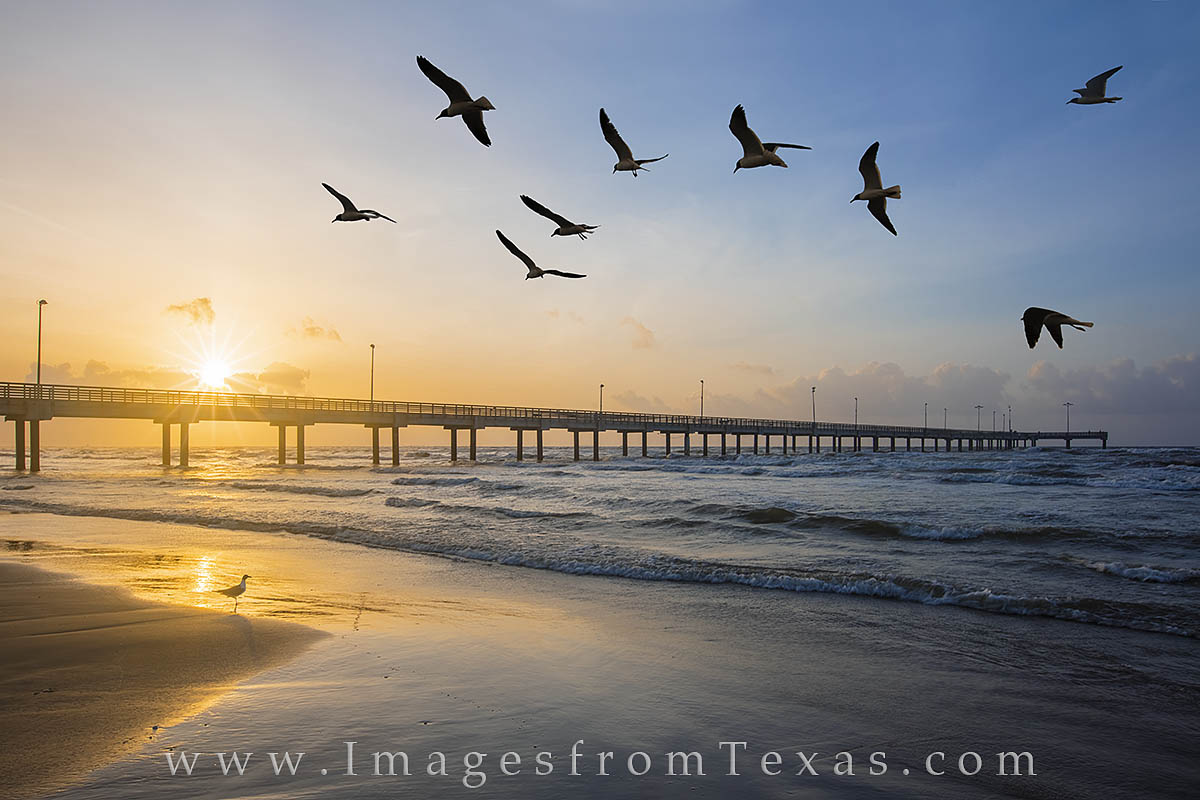 With Caldwell Fishing Pier strething 1200 feet into the Gulf of Mexico, seagulls float in the breezes along Port Aransas beach...