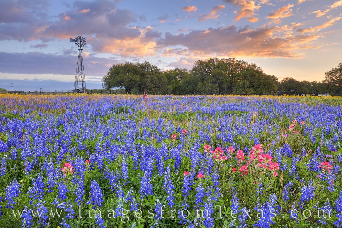 Atascosa county, wildflowers, bluebonnets, paintbrush, windmill, morning, poteet, south texas, sunrise, peace, blue, red, spring, bloom, photo