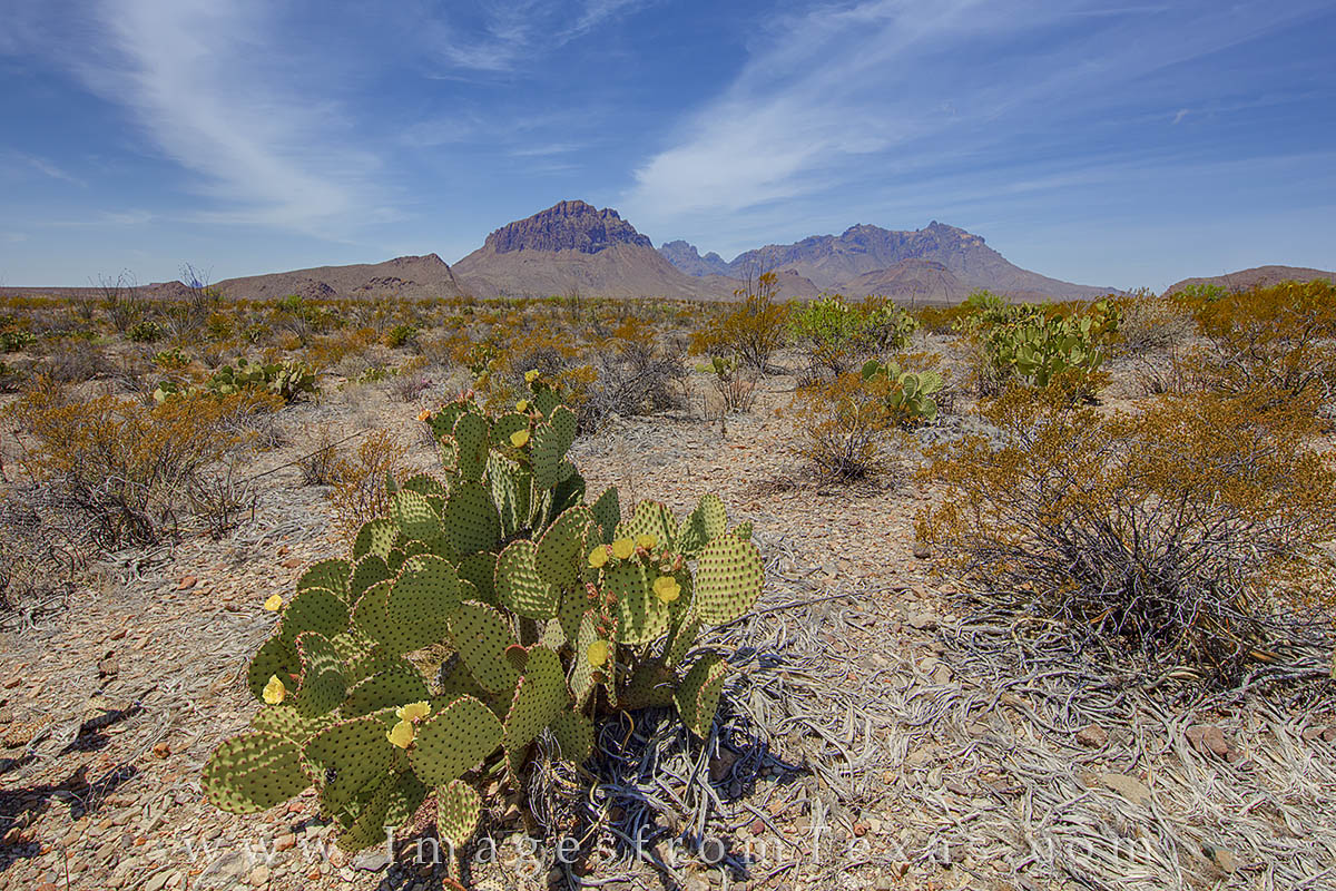 big bend, big bend images, Chihuahuan Desert, Big bend national park, prickly pear, texas landscapes, photo