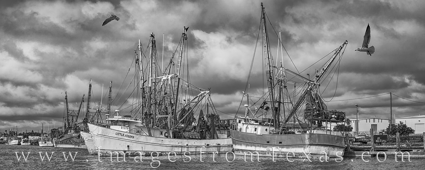 black and white, port isabel, shrimp boats, seagulls, dock, harbor, shrimpers, boats, south padre, texas coast, gulf of mexico, photo