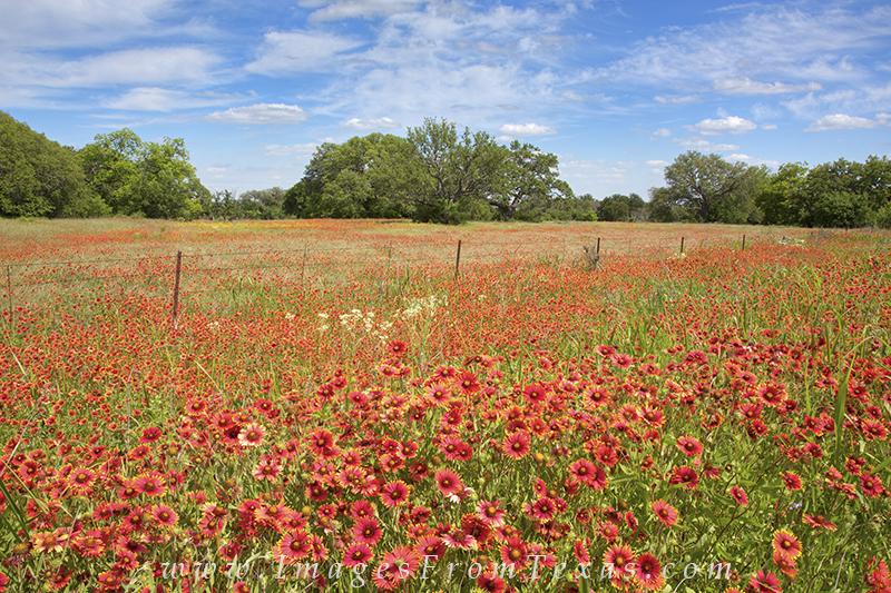 Texas wildflowers,texas hill country,hill country prints,wildflower prints,texas landscapes, photo