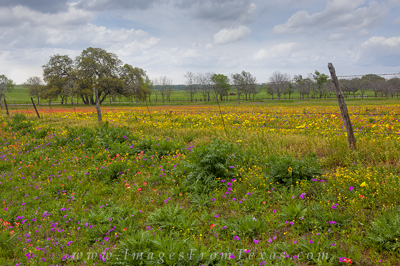 texas wildflowers,texas landscapes,new berlin,indian paintbrush, photo