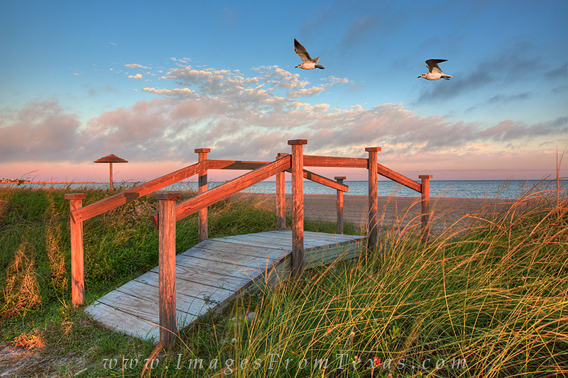 rockport beach images,rockport texas,seagulls,texas gulls,texas coast photos, photo