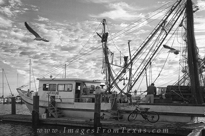 rockport harbor,rockport,texas,texas in black and white,black and white, photo