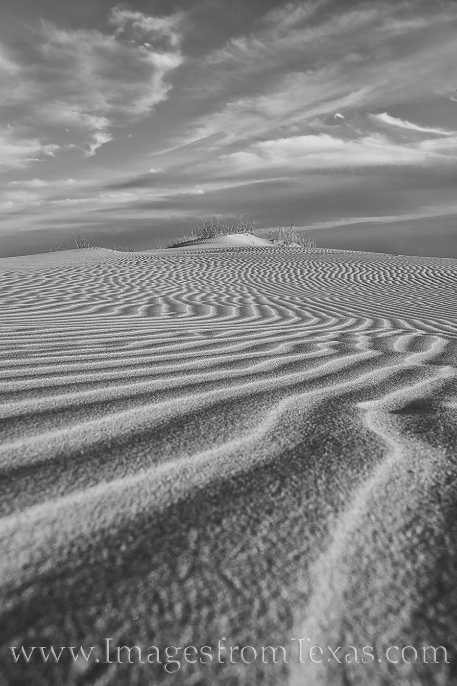 monahans, sandhills, sandhills state park, sand dunes, texas dunes, sand, texture, west texas, monahans sandhills state park, state parks, texas state parks, texas parks, black and white, photo