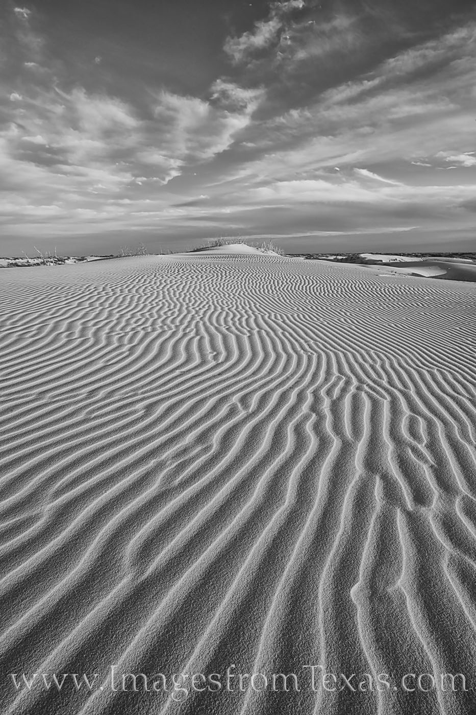 monahans, sand dunes, sandhills, sandhills state park, black and white, west texas, sand, dunes, photo