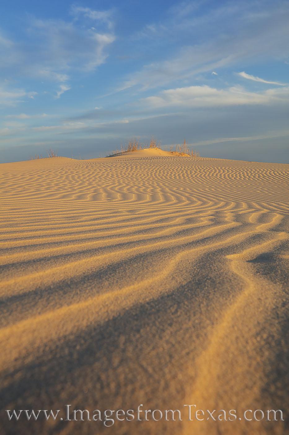 monahans, sandhills, sandhills state park, sand dunes, texas dunes, sand, texture, west texas, monahans sandhills state park, state parks, texas state parks, texs parks, photo