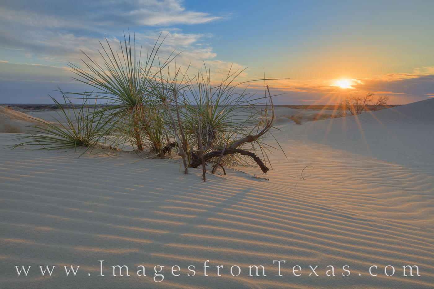 Monahans, sand dunes, sandhills, sand, west texas, sunset, evening, sunburst, yucca, shadows, photo