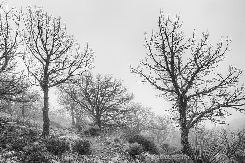 texas black and white,big bend images,big bend national park,black and white,emory peak trail,emory peak, photo