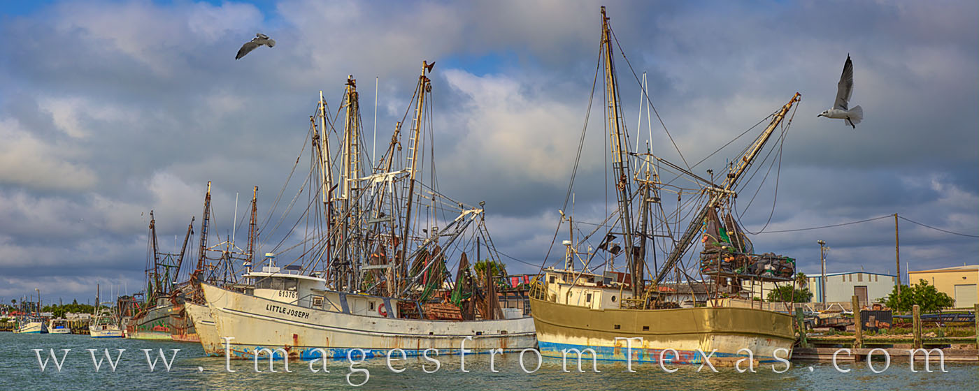 shrimp boats, seagulls, port isabel, panorama, spring, texas coast, shrimp, boats, harbor, dock, south padre, photo