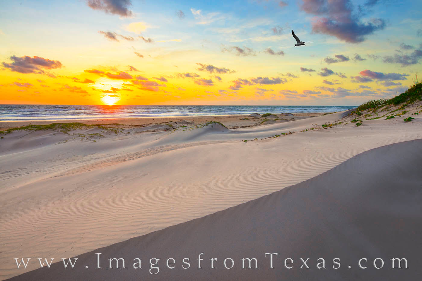 south padre island, texas coast, gulf of mexico, south texas, sand, beach, sand dunes, morning, sunrise, photo