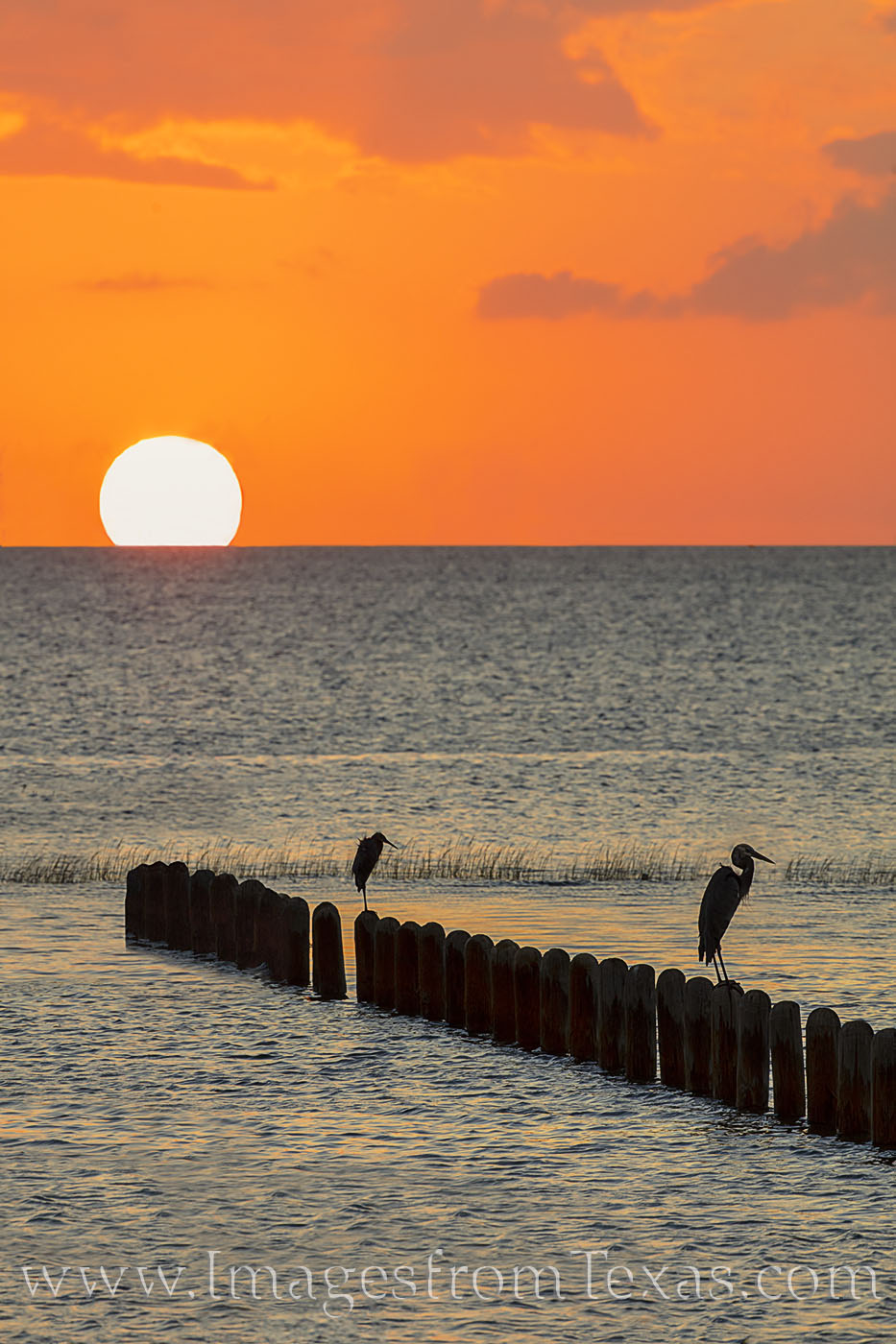 south padre island, sunset, port isabel, south texas, gulf of mexico, ocean, bay, egret, birds, ocean birds, photo