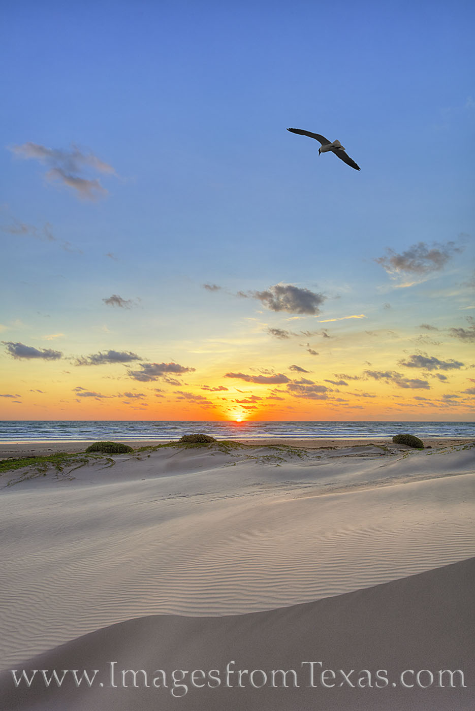 south padre island, seagull, sunrise, beach, sand dunes, orange, sun, morning, island, port isabel, gulf of mexico, ocean, east, photo