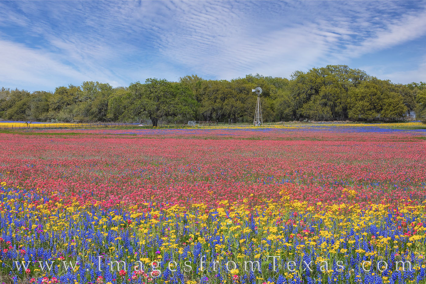 wildflowers, poteet, bluebonnets, paintbrush, groundsel, phlox, windmill, san antonio, south texas, color, spring, blue, red, yellow, purple, photo