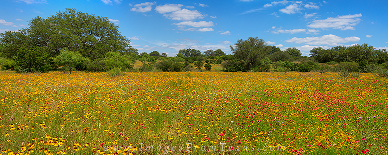 texas wildflowers,texas hill country,texas spring,wildflower photos,texas hill country landscape, photo