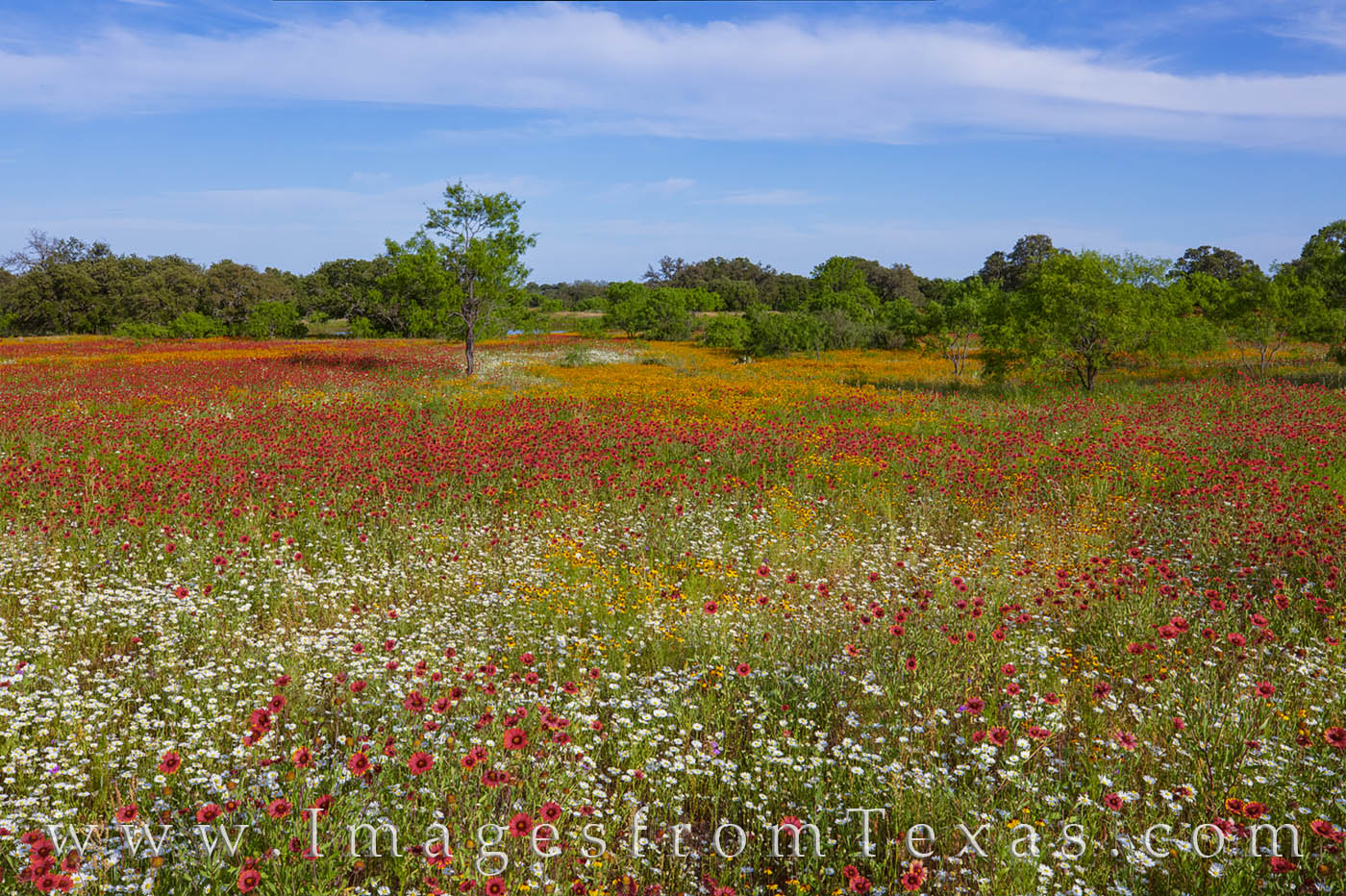 wildflowers, indian blankets, hill country, mason, spring, afternoon, color, beautiful, photo
