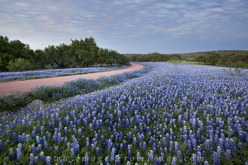 Long after the sun had disappeared behind the horizon, this field of bluebonnets was perfectly still. The Texas landscape was...