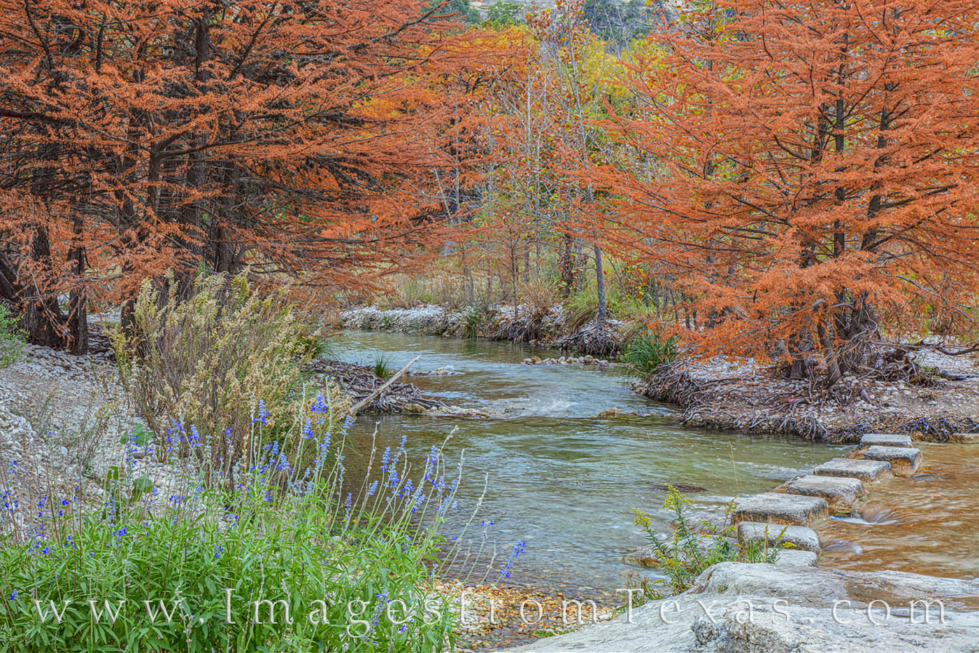 garner state park, frio river, cypress, wildflowers, fall, autumn, november, photo