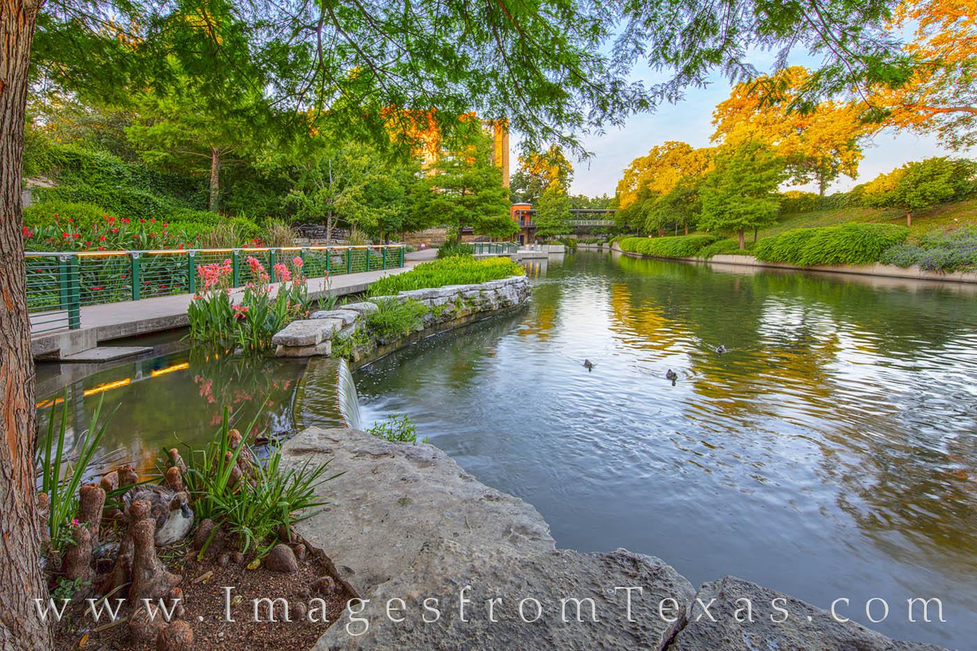 pearl district, san antonio, riverwalk, duck, morning, walking, summer, photo
