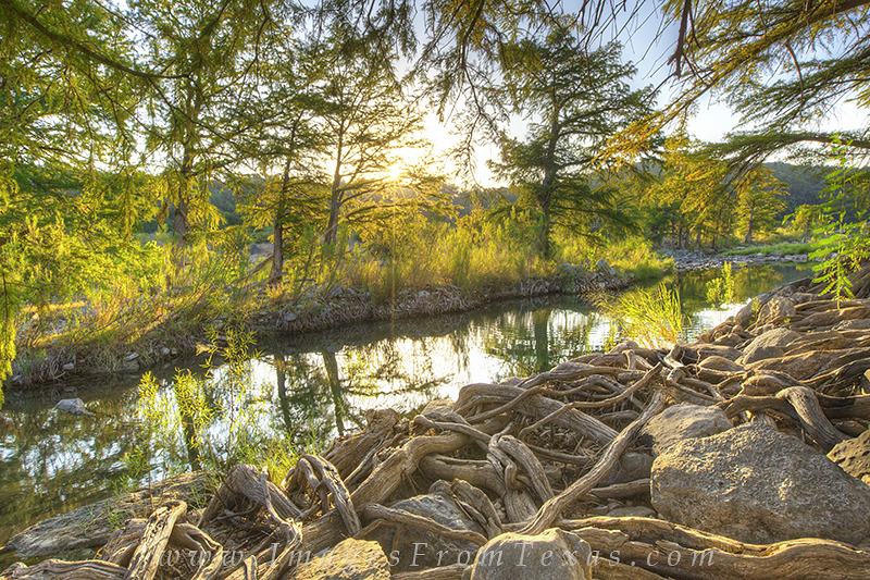 One of my favorite little sections of the Pedernales River in the state park is here with the cypress and their gnarled roots...