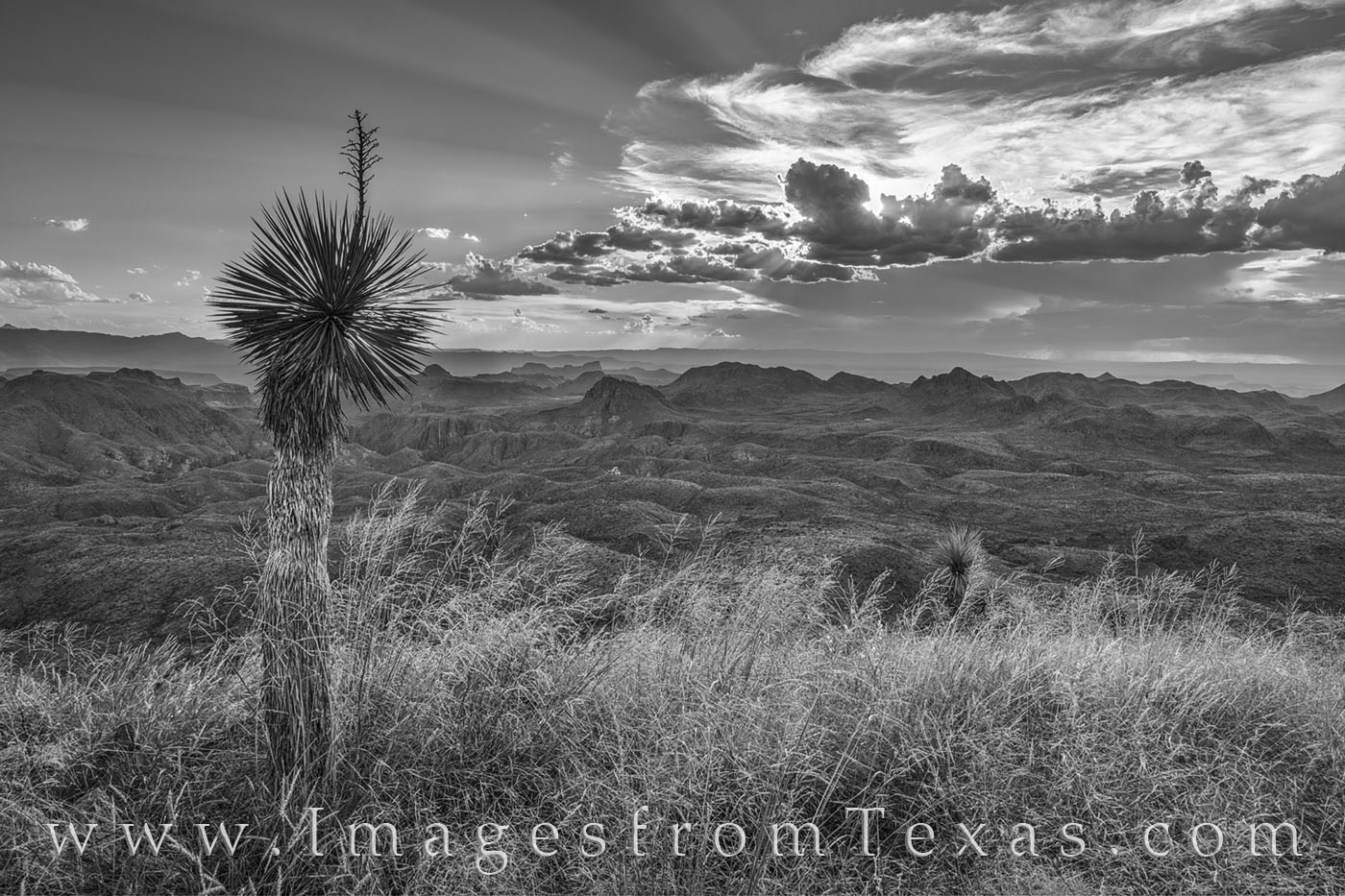 oso peak, big bend ranch, texas state parks, sunset, yucca, black and white, photo