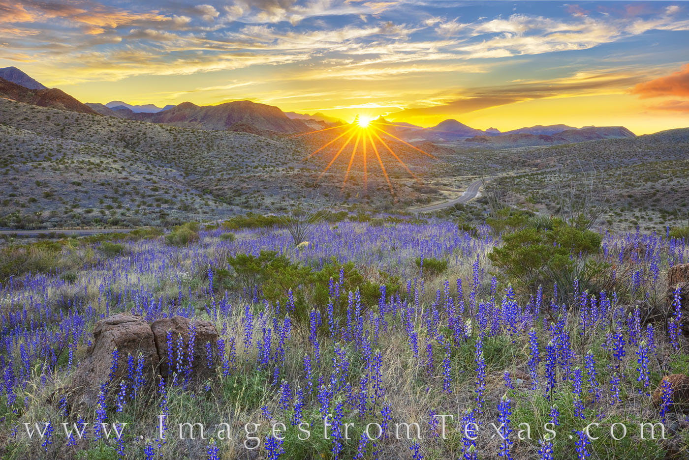 Bluebonnets, big bend, big bend bluebonnets, spring, 2019, mule ears, big bend national park, Texas national parks, desert bloom, Texas wildflowers, west Texas, desert wildflowers, chisos mountains, c, photo